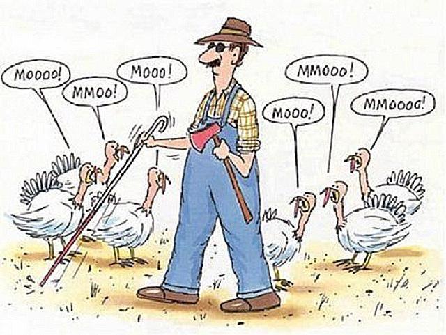 Thanksgiving Turkey Moo cartoon