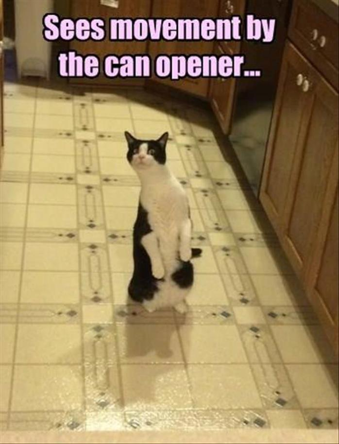 Can Opener Cat Attention