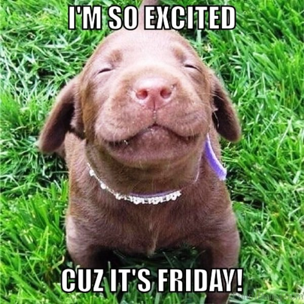 Excited Friday Dog