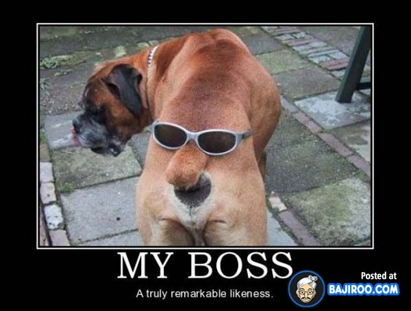 True Boss Face image dog butt