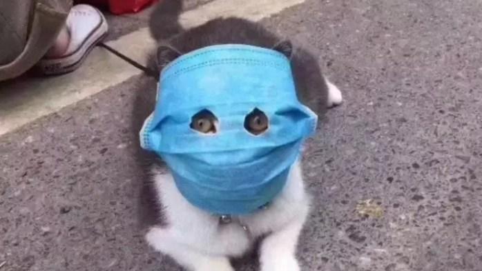 Coronavirus Cat image