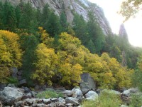Yosemite Fall Color at the 120/140 junction