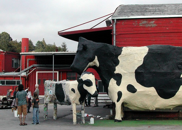 Kirby Scudder Cows at the Tannery