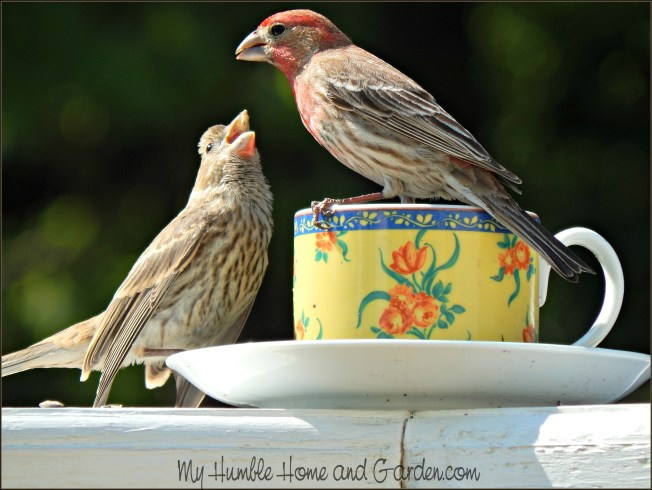 Backyard Bird Feeder - Make Your Own Teacup Bird Feeder on MyHumbleHomeandGarden.com