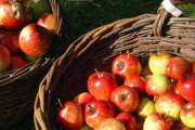 Voćarstvo i pripremanje voća za zimnicu