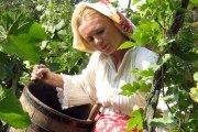 Berba i obrada vina na tradicionalan način
