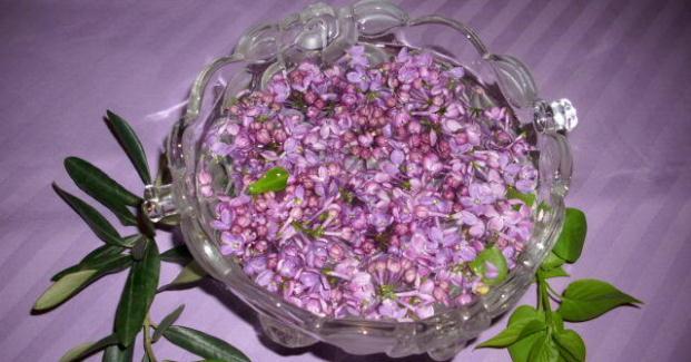 Cvjetnica ili Cvijetna Nedjelja tradicija i običaji