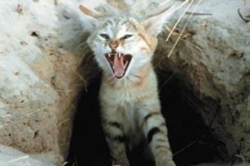 Priča o vještici i mački