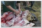 Tančarenje crne slavonske svinje (2)