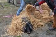 Tradicionalno Slavonsko kolinje i stare slavonske delicija