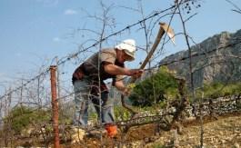 Proljetni poslovi i sadnja