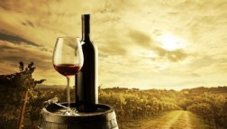 Enolog stručnjak za vino