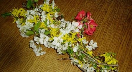 Uskršnje cvijeće na cvjetnicu