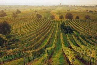 gradišćanski vinogradi