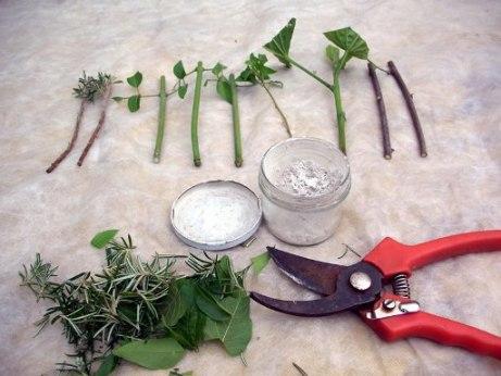 presađivanje iz reznice biljke