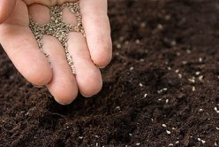 sadnja ljekovitog bilja