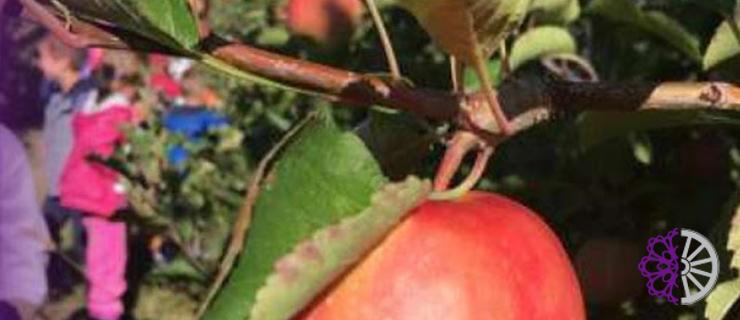 Planiranje i uzgoj malenog obiteljskog voćnjaka