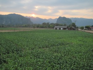 laos-konglor-tobacco