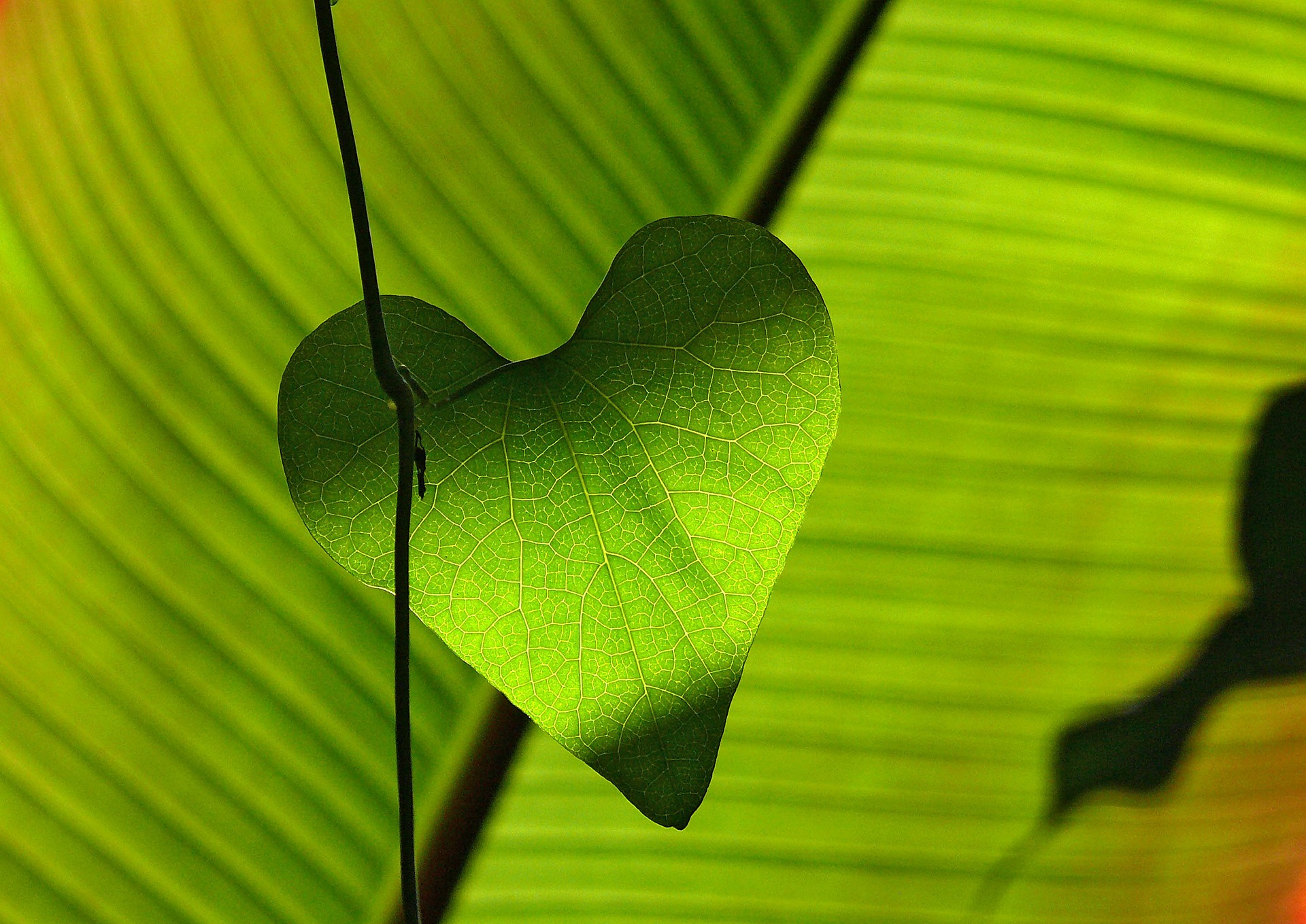 leaf_heart_spiritual_search