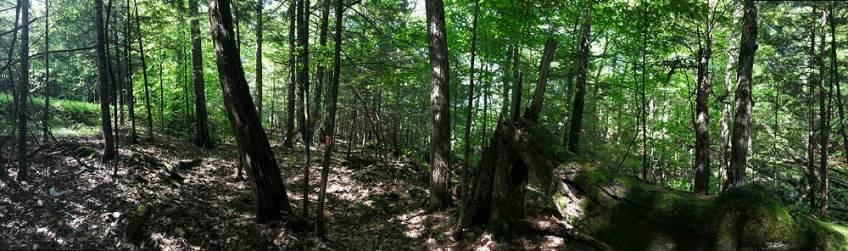 Woods, Lyme, NH