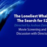 The Loneliest Whale: The Search for 52 – National Lighthouse Museum