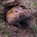 Getting Time Loopy: The Groundhog Day Effect