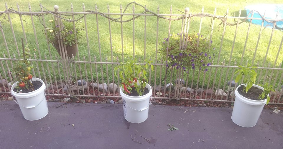 Vegetable Garden Anywhere: 5 gallon buckets