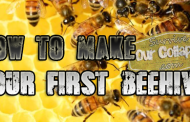 My first Beehive (How to start your first)