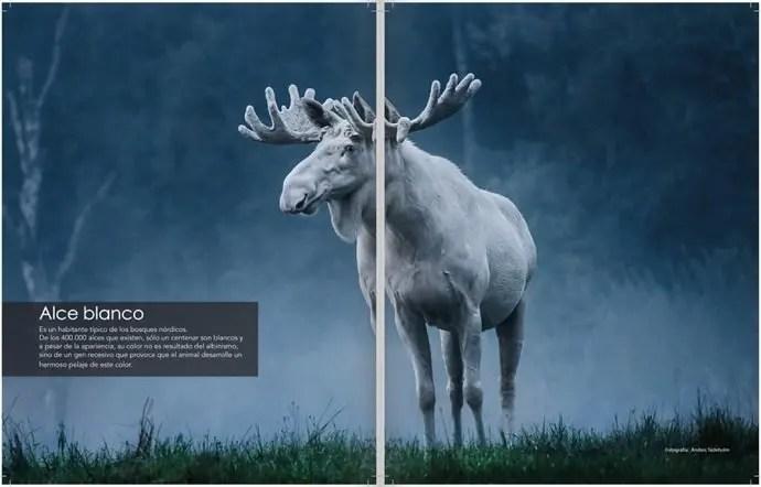 Svea y Pablo - 101 Sweden - Maravillas de Suecia - Alce blanco