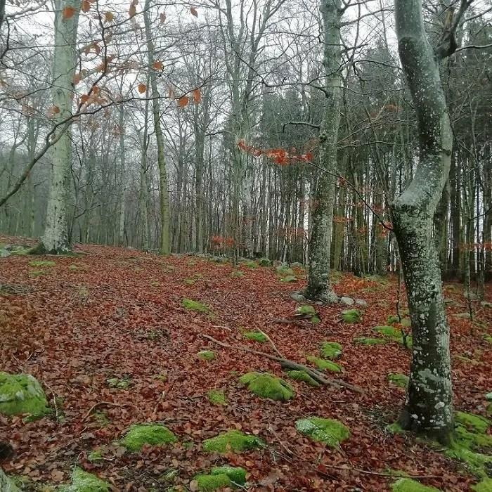 Svea y Pablo - More GK - h18 - bosque