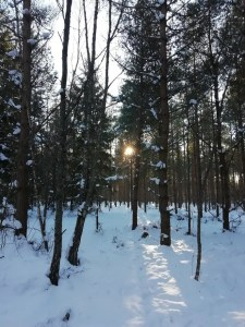 Bosque a Jarnsida desde Skappevik