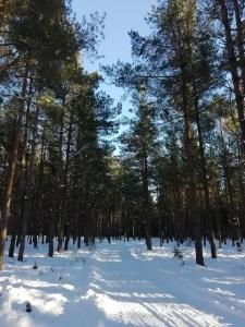 El camino que atraviesa el bosque de Skappevik