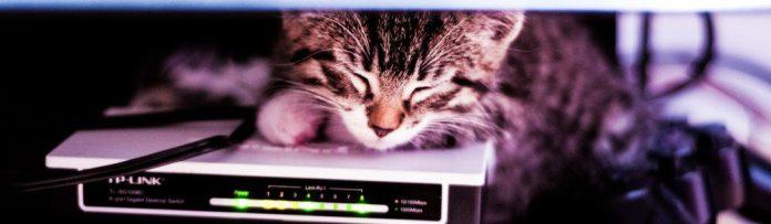 Router Cat Sleeping Animal Network Kitten Photo Geek