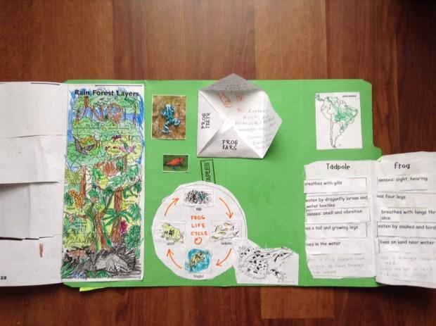 Rainforest Lap Book