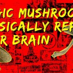 Magic Mushrooms Physically Repair Your Brain