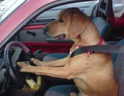 Florida Man Said His Dog Put The Police on A High Speed Chase