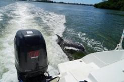 Dolphin_Port