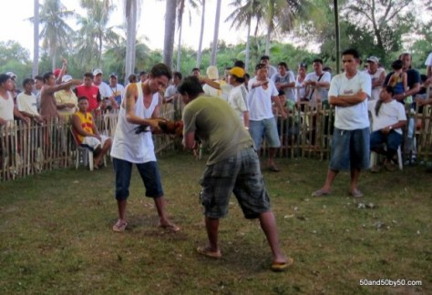Cockfight - betting and prefight sizing up | Cockfight in Bohol, Philippines