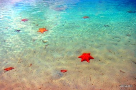 Starfish beach in Bocas del Toro. Playa La Estrella. A must visit when island hopping in Bocas del Toro Panama