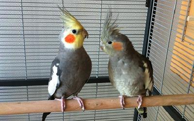 Photos birdandyou.com