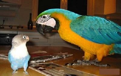 Comment choisir son oiseau de compagnie ?