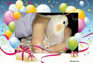 cadeau oiseau: Passion des perruches et perroquets