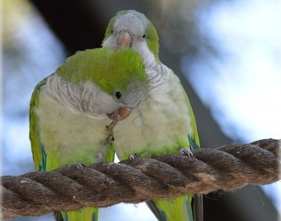 couple quaker