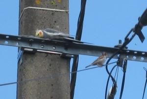 oiseau perdu: Passion des perruches et perroquets