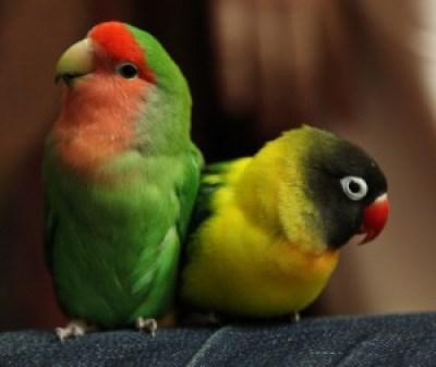 couple inséparable