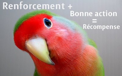 le renforcement positif chez l'oiseau