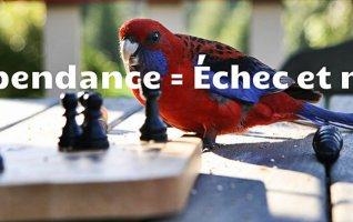 La dépendance chez l'oiseau = échec et mat