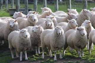 Die Auswahl deiner Einsatzbereiche für die Farmarbeit in Argentinien ist richtig groß