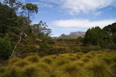 Der Weite Dschungel von Australien.
