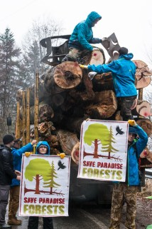 Protests against illegal logging in Romania